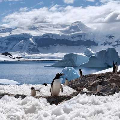 Antartica Adventure Chile