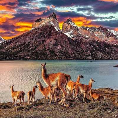 Patagonia Spanish School